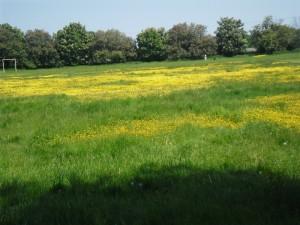 Barbara Laker Abingworth meadow
