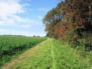 Path-to-Little-Thakeham (1)