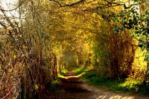 Zoe-Brunning Path (1)
